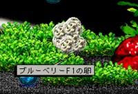 iMacinfishの卵